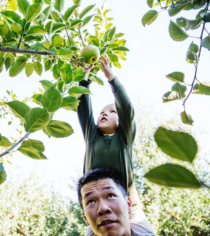 child apple picking from dad's shoulders