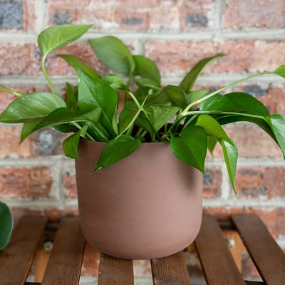 Thirtypot Terra-Cotta Planter Pots (2 Pieces)
