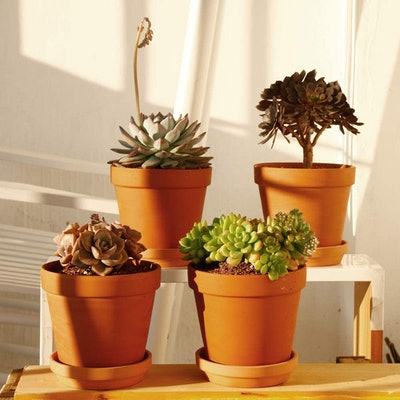 Yishang Large Terra-Cotta Pots With Saucers, 6 Inches (4-Pack)
