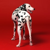 Why do dogs wag their tails? Scientists reveal a complicated answer