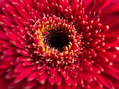 Here's how to use macro photography on iPhone 13 Pro and Pro Max for amazing details.