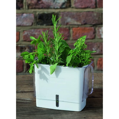 COLE & MASON Fresh Herb Keeper