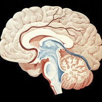 Brain health diet: Study reveals this way of eating slows cognitive decline