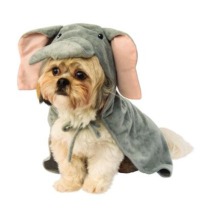 Little dog dressed as an elephant