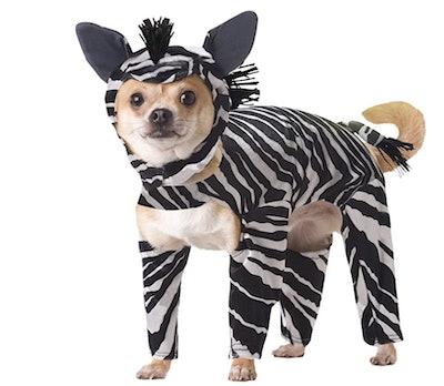 Dog dressed in Zebra costume