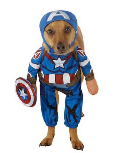 Dog dressed in Captain America costume