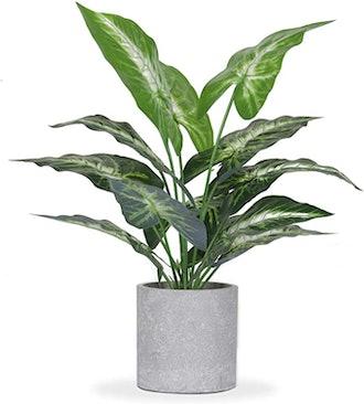 JC nateva Decorative Plant