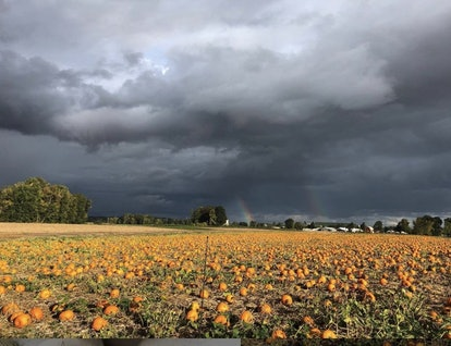 clouds and rainbows over the Pumpkin Patch in Sauvie Island, Oregon