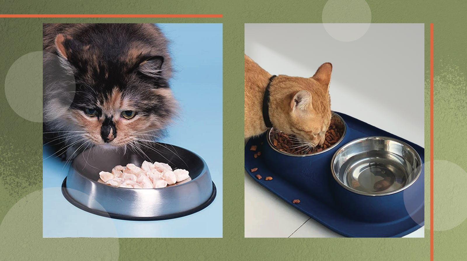 Best Food Bowls For Your Cat