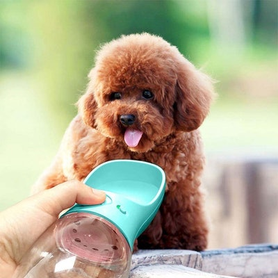 MalsiPree Dog Water Bottle