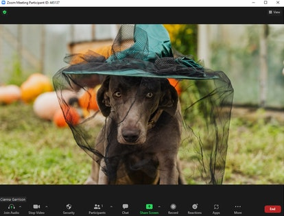 These cute Halloween Zoom backgrounds include a pup in a witch hat.