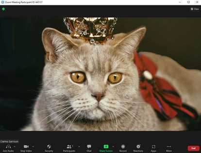 This cute Halloween Zoom background featured a grey tabby cat with a royal costume.