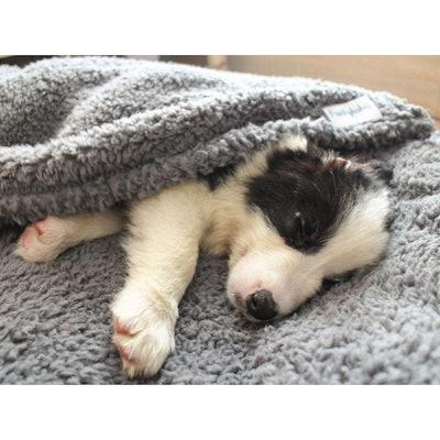 furrybaby Fluffy Fleece Dog Blanket