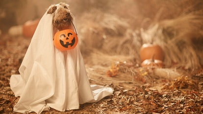 These cute Halloween Zoom backgrounds feature the sweetest pups in costumes.