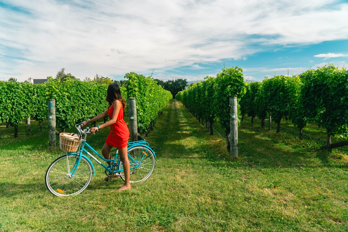 Woman in a red dress riding a bicycle in vineyards. View of grapevines Shot in Blenheim, South Islan...