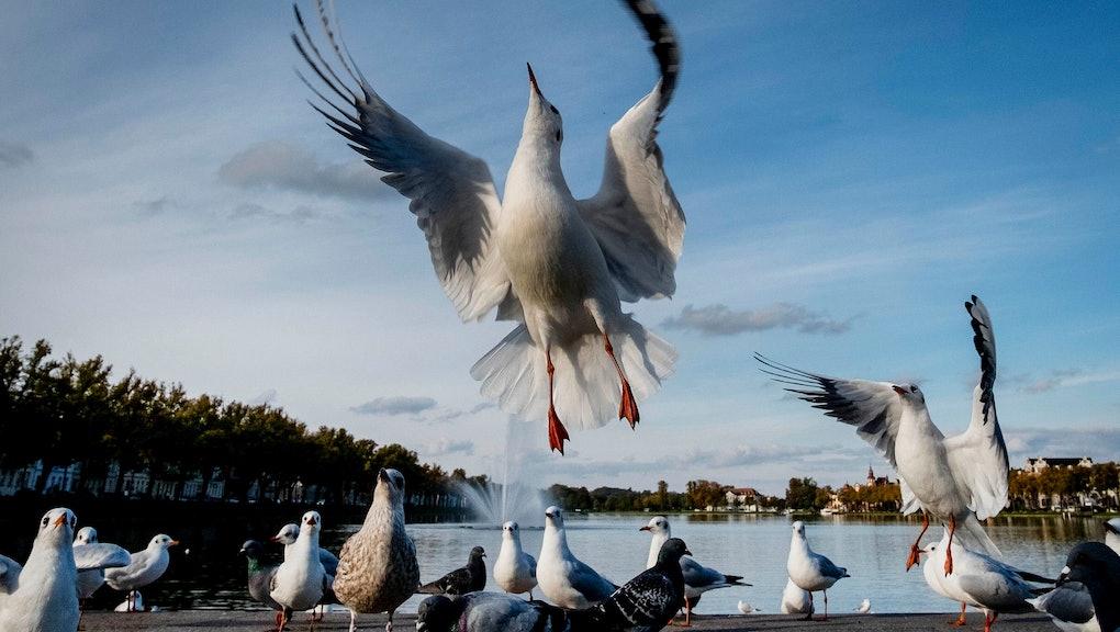 A seagull flies near a small lake in Schwerin, eastern Germany