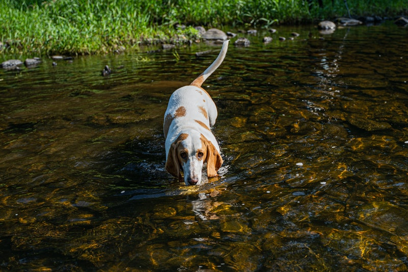 The best low maintenance dog breeds for people who work full time.