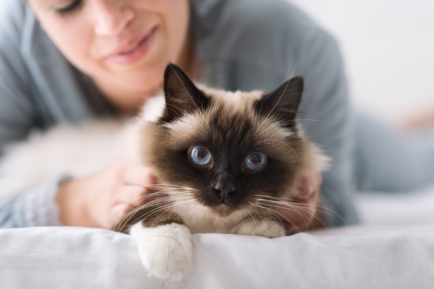 Smiling woman lying on the bed and cuddling her soft beautiful cat, pets and lifestyle concept
