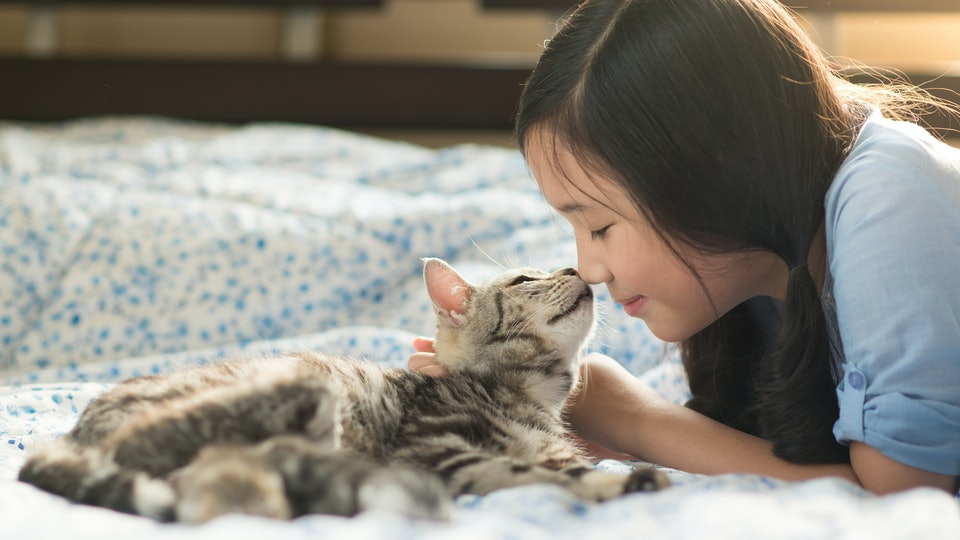Beautiful asian girl kissing american shorthair cat on the bed