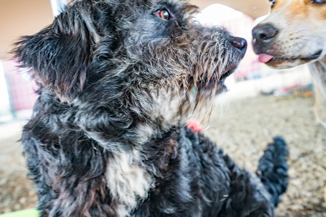 Best Friends Animal Society has many volunteer opportunities in Dogtober