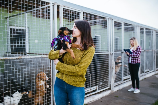 There are lots of ways to help dogs in shelters during Dogtober.