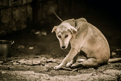 Help chained dogs during Dogtober