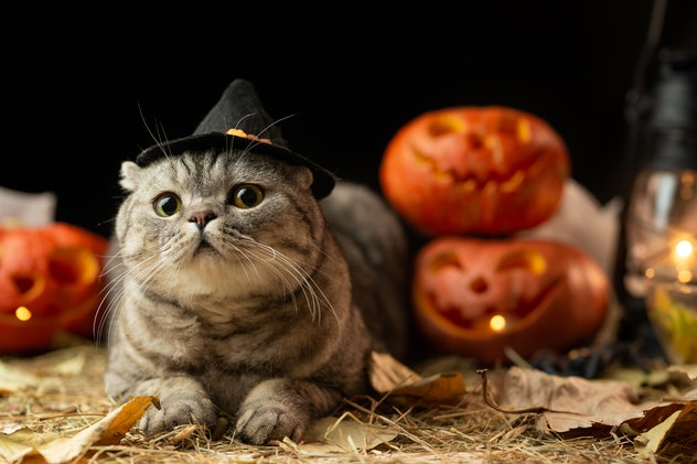 Halloween cat with hat