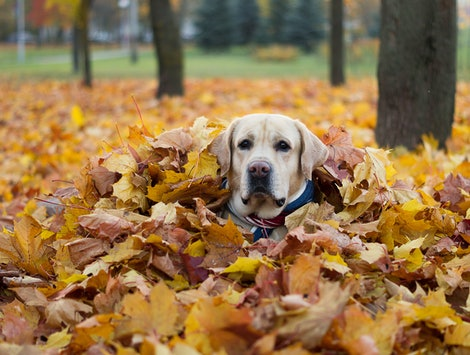 Dogtober events are taking place across the country in the month of October.
