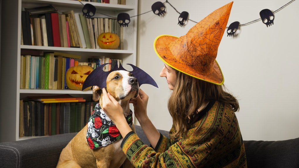 A girl wearing a witch hat dressing up her dog in a Halloween bat costume would need captions for any costume pics she takes with her pup.