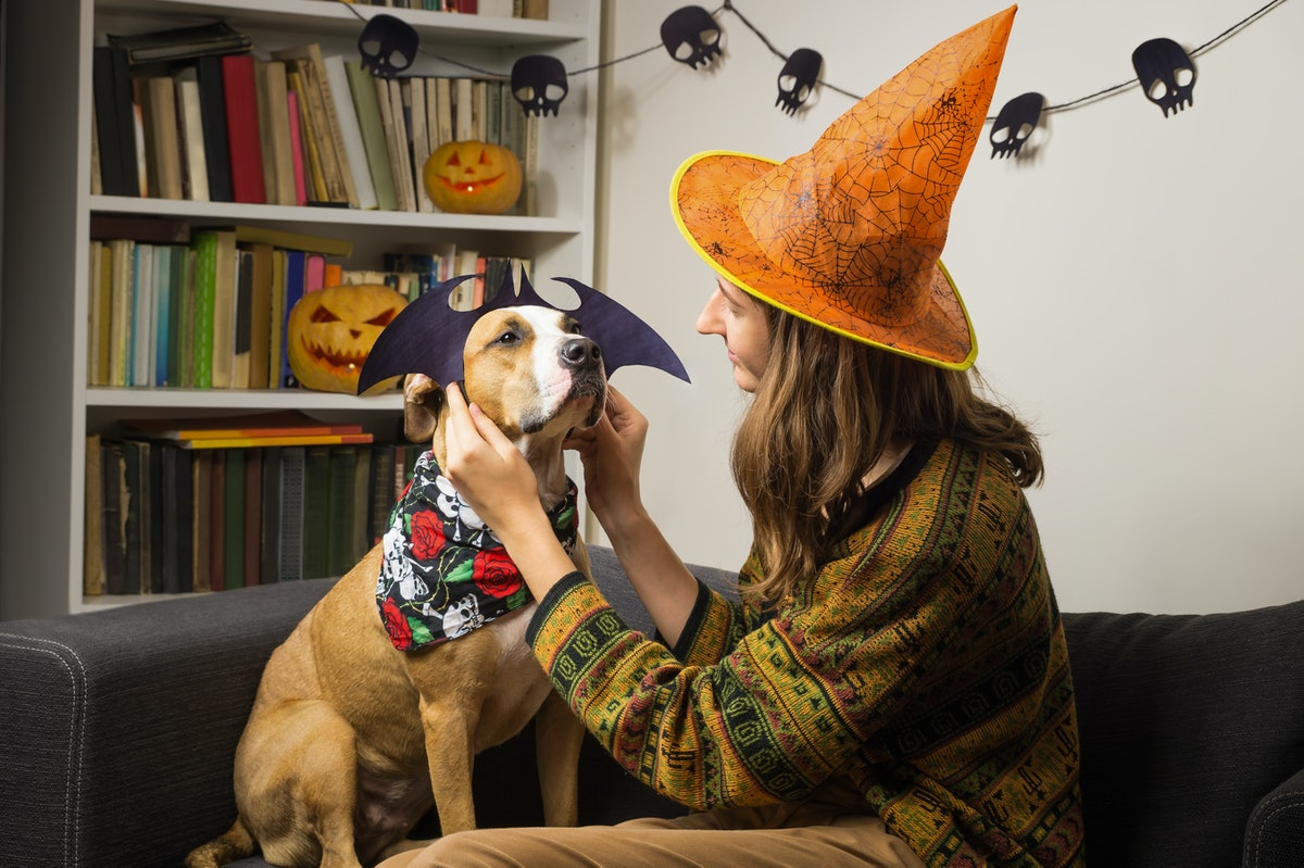 A girl wearing a witch hat dressing up her dog in a Halloween bat costume would need captions for an...