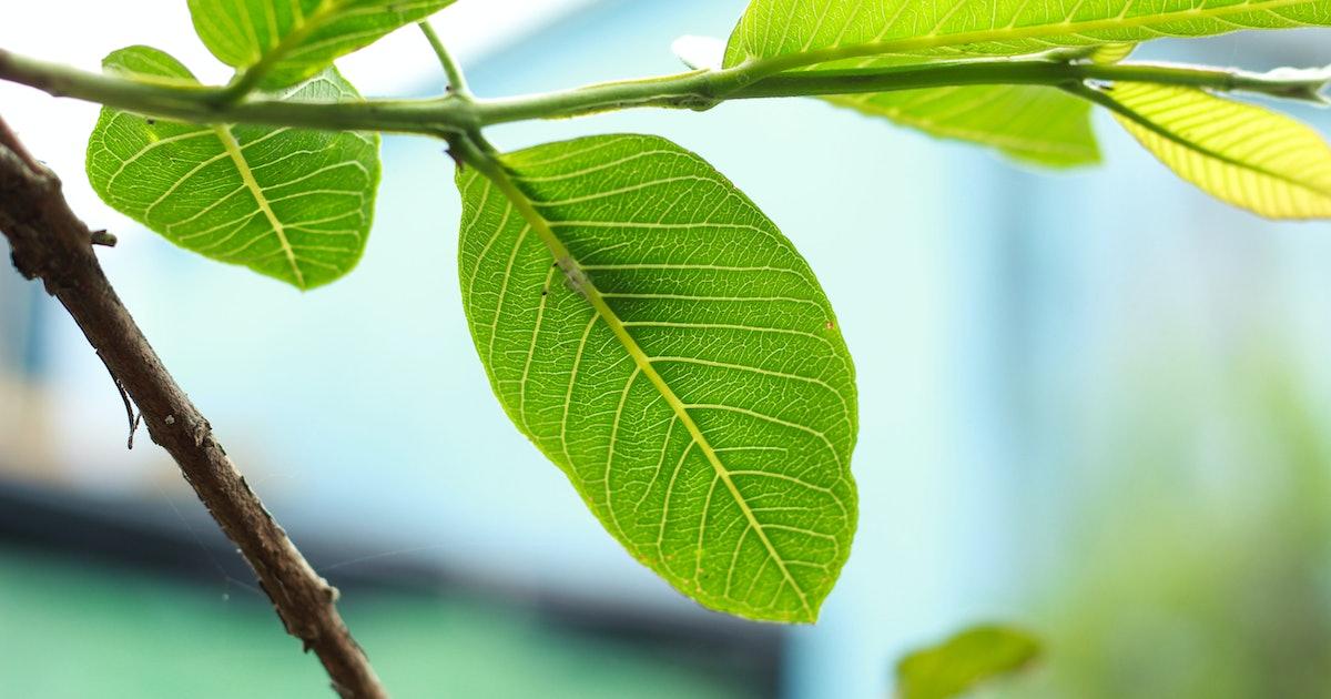 """Scientists develop """"artificial leaf"""" that produces clean fuel"""