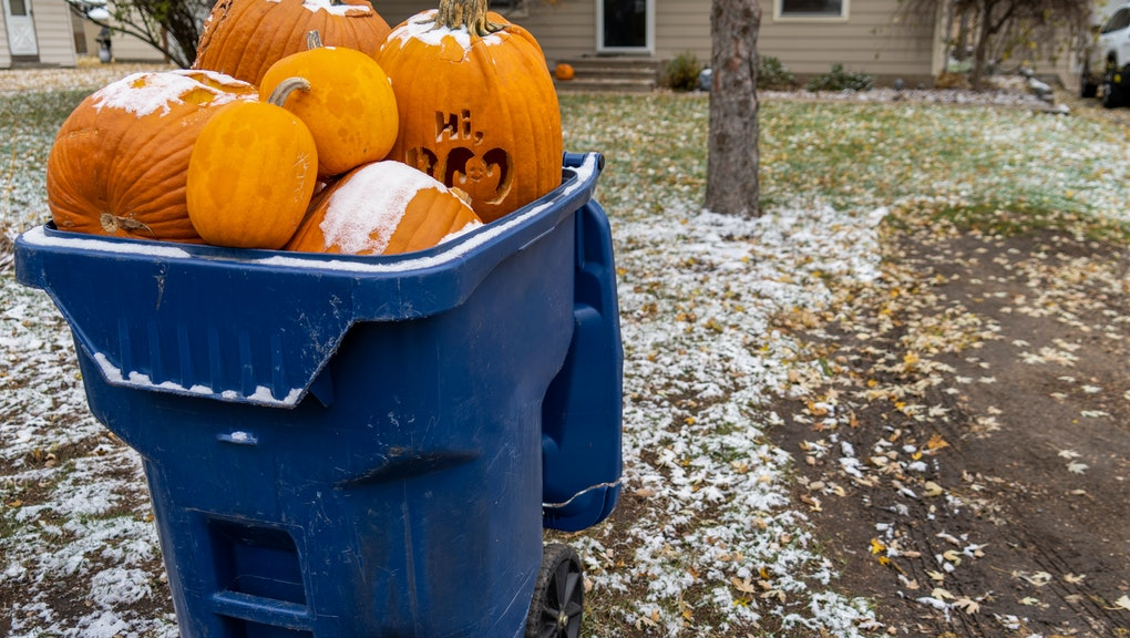 Giant pumpkins sitting in a trash dumpster waiting for garbage pickup after Halloween. Concept for changing seasons, food waste