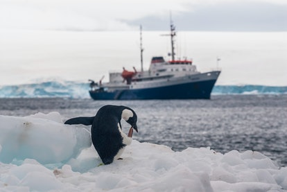 Expedition ship, cruise in Antarctic landscape, Paulet island, n