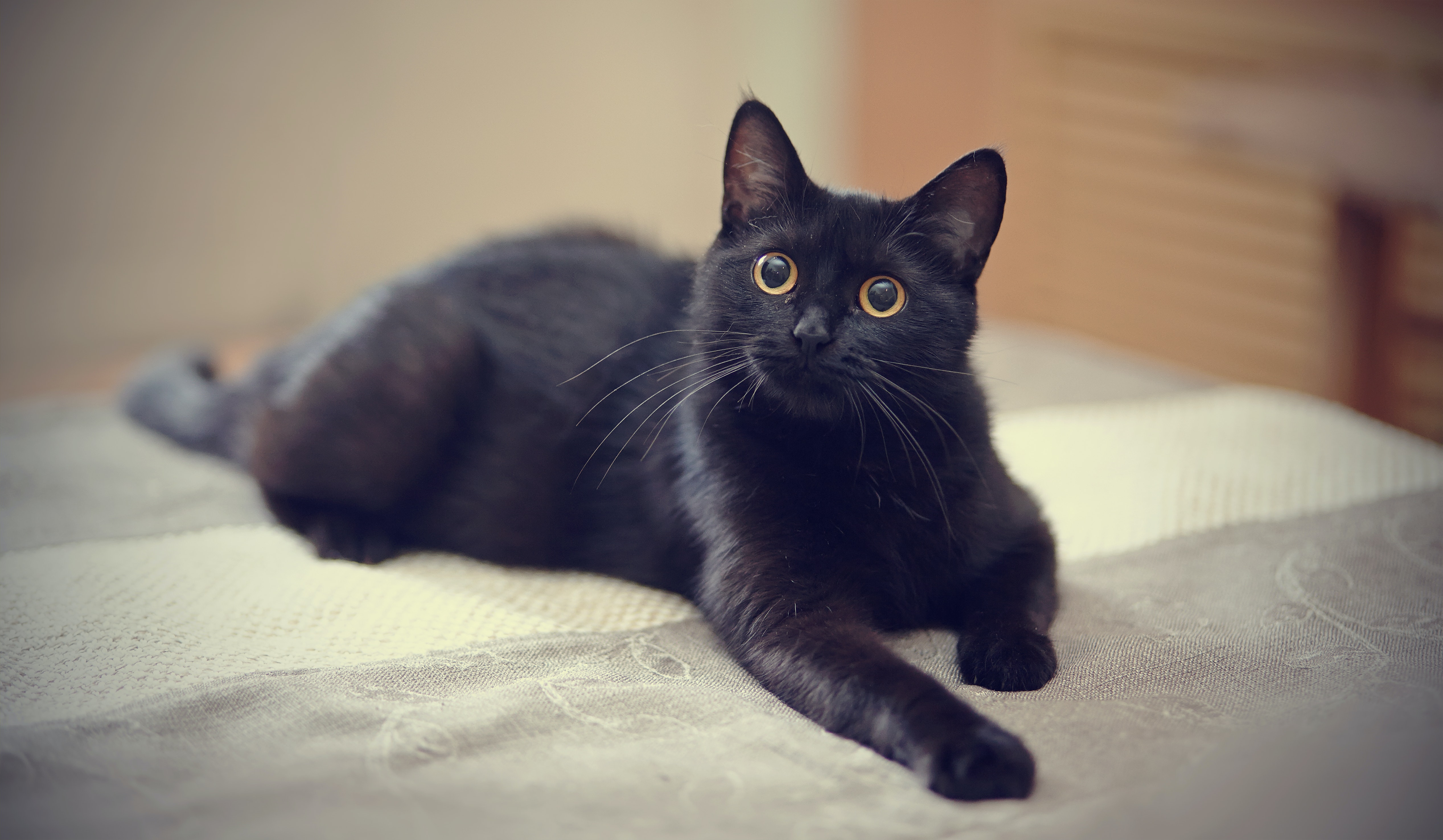 8 Fascinating Facts About Black Cats, Because They\u0027re Not