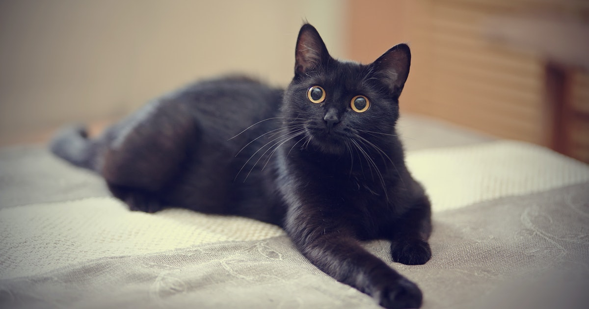 8 Fascinating Facts About Black Cats, Because They're Not Spooky At All