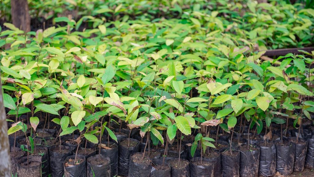 Seedlings for reforestation for a good environment.