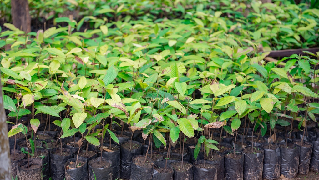 Seedlings for reforestation for a good environment.