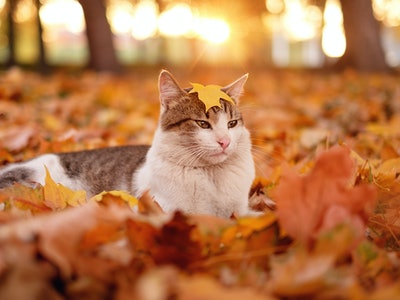 cat with October name in autumn leaves