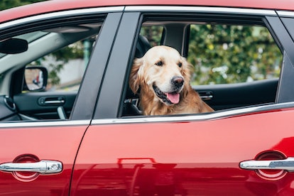Uber Pet gives dog owners the option to bring their dogs along in their rides for a small surcharge fee.