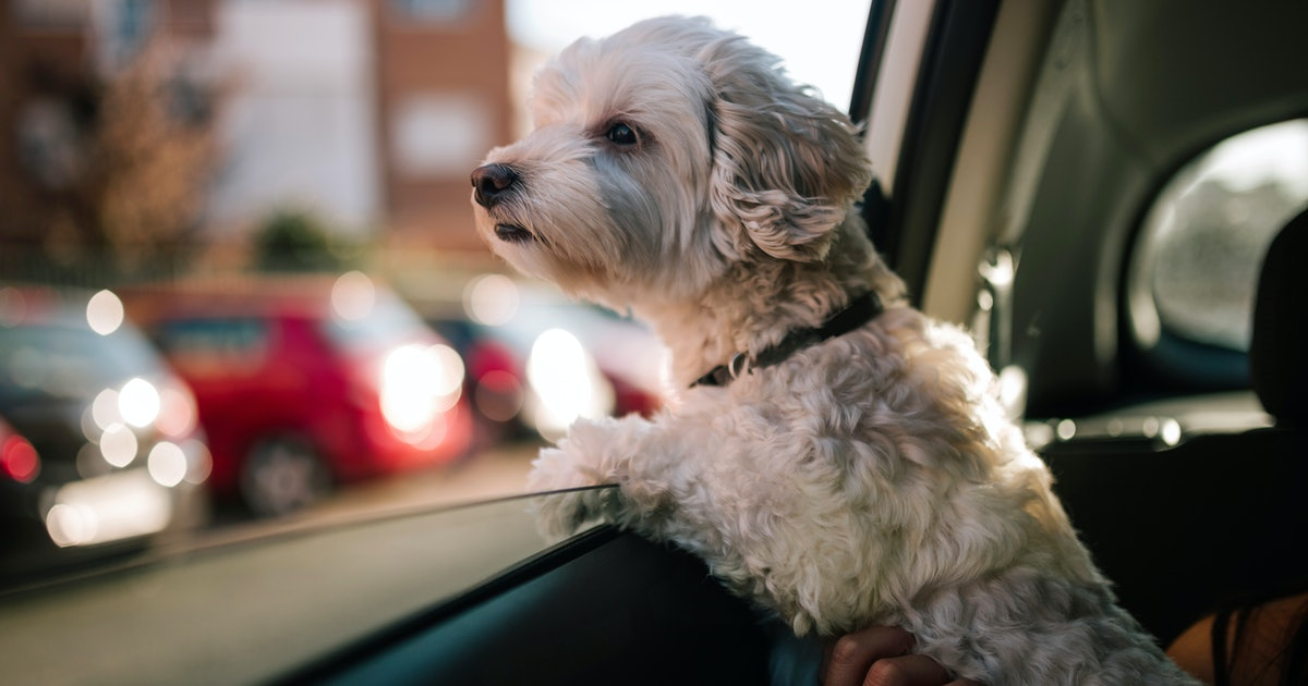 """Can You Bring Your Dog In An Uber? """"Uber Pet"""" Lets You Decide"""