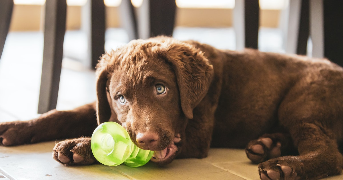 The 14 Best Chew Toys For Dogs