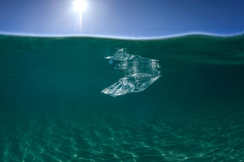 Plastic in the ocean, Sydney Australia