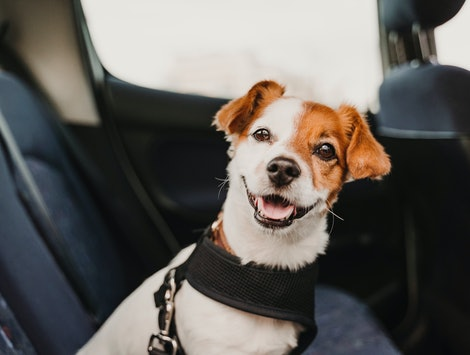 Travelling with your pet after Brexit could be expensive and time-consuming