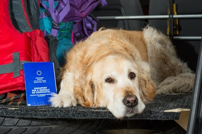 EU pet passports will be invalid after Brexit
