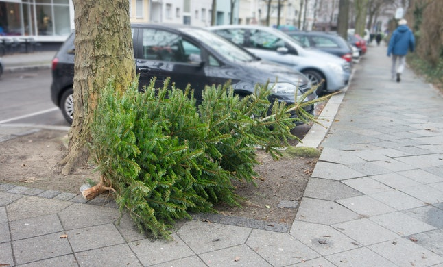 Throw away fir tree or christmas tree after new year, discarded christmas tree