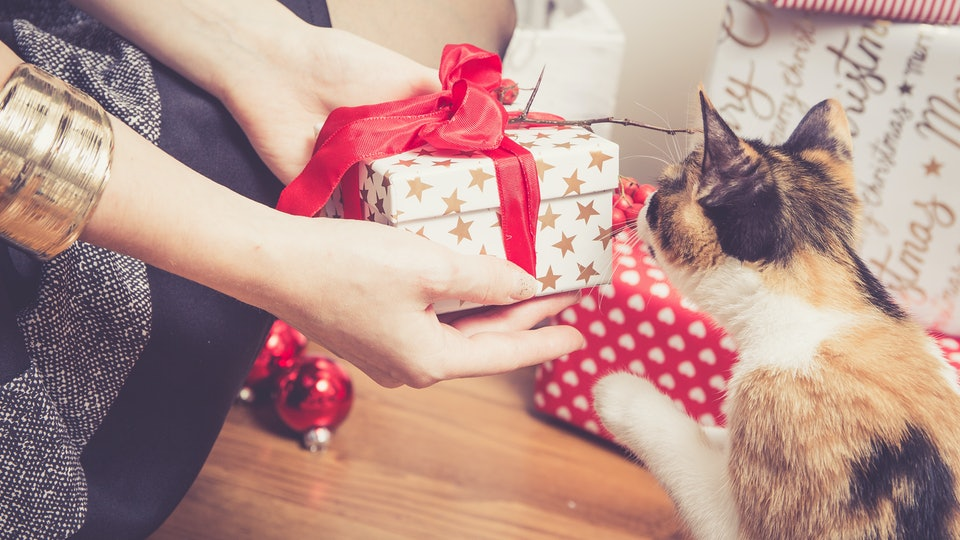 Study reveals people spend a lot of money on their pets for the holidays.