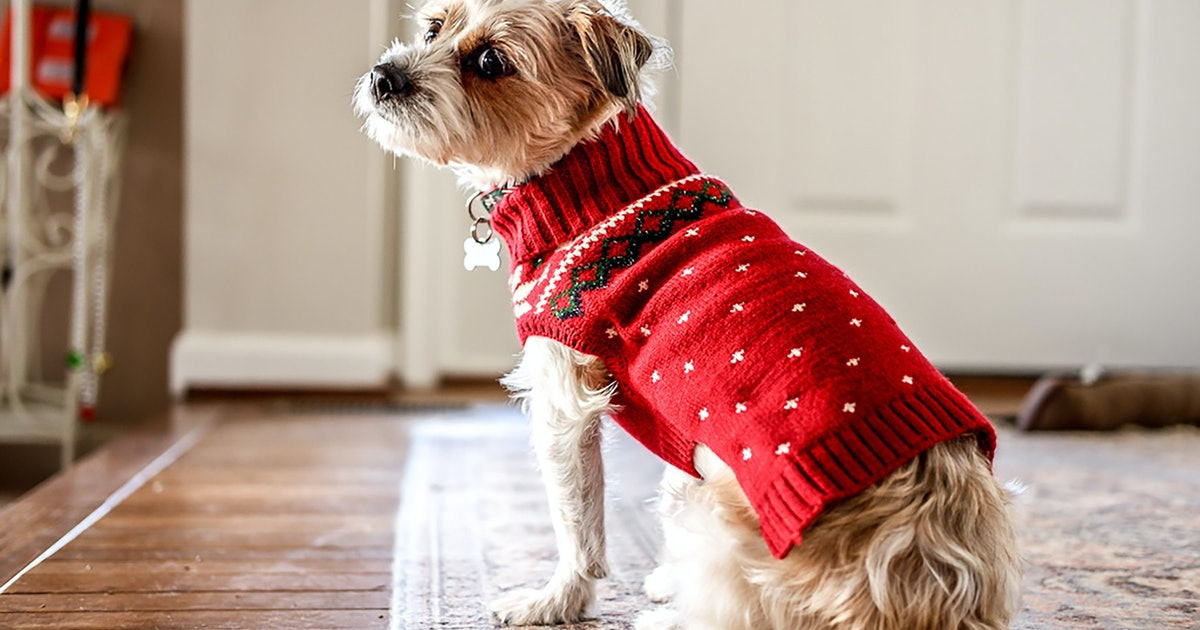 Holiday Sweaters That Are Too Darn Cute