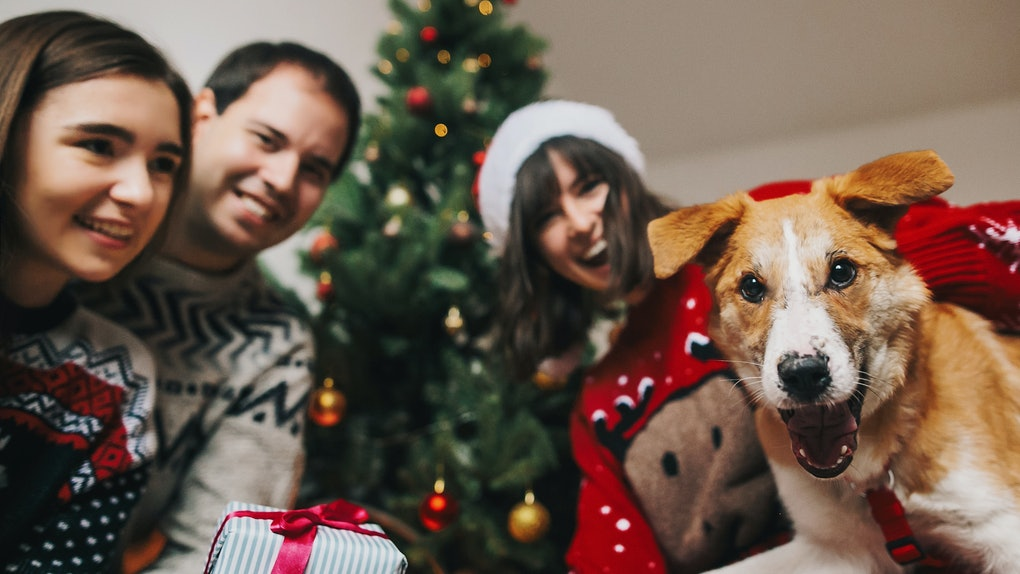 A group of friends dressed in holiday sweaters gather in front of the Christmas tree with a dog who looks like he's smiling.