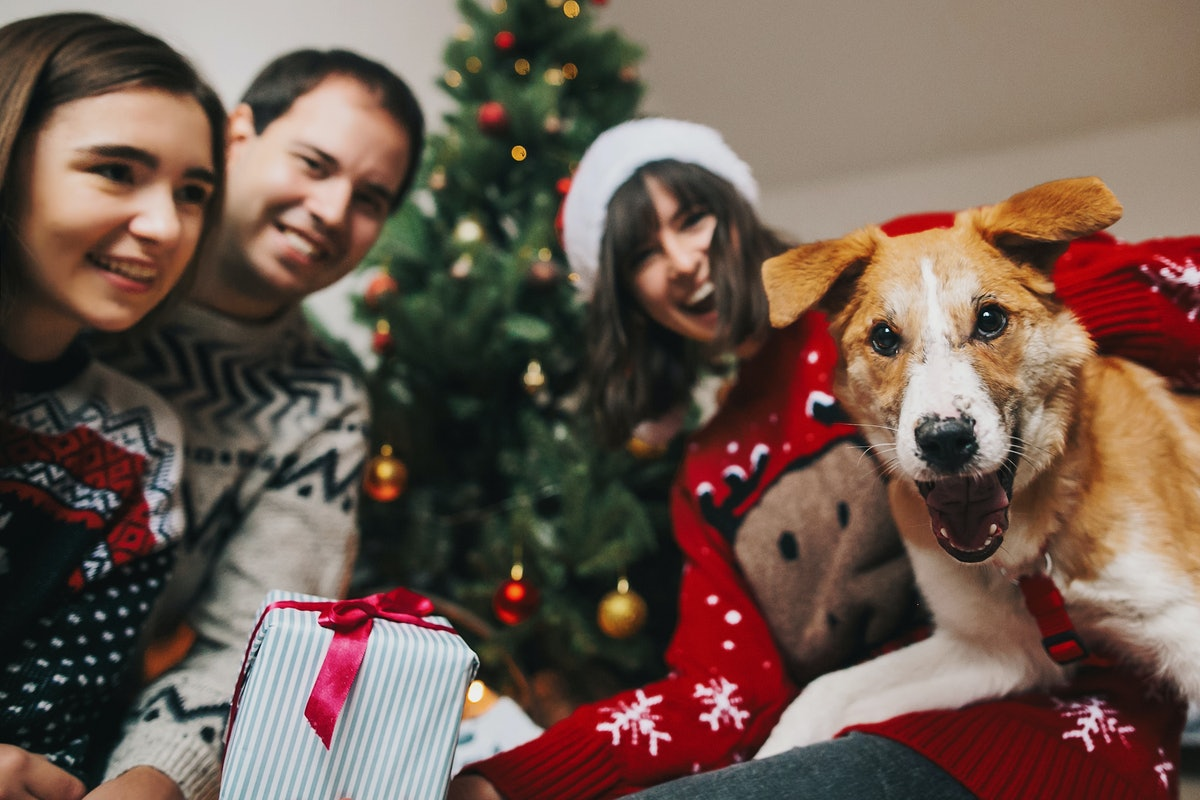 A group of friends dressed in holiday sweaters gather in front of the Christmas tree with a dog who ...
