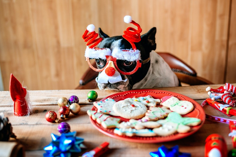 Dog with Christmas glasses on a table with cookies and Christmas objects